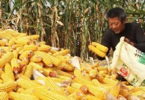 全球近6.9亿人处于饥饿状态下半年需要囤粮吗