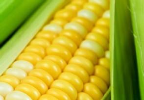 中储粮公布储备粮食问题调查结果官方最新回应公布