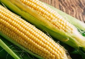 中储粮公布核查结果玉米数量和质量没问题