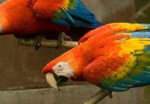 大学生售卖2只鹦鹉一审获刑6年到底是怎么回事