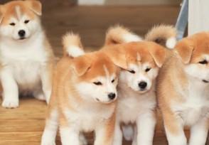深圳犬只未植入芯片将被视为无证养犬 爱狗人士需注意