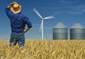 小麦价格集体上涨 目前最低收购价是多少?