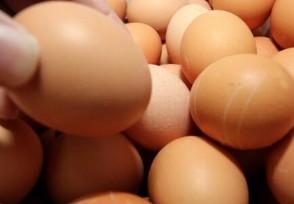 鸡蛋批发价月内涨近三成 为什么会出现强势反弹?