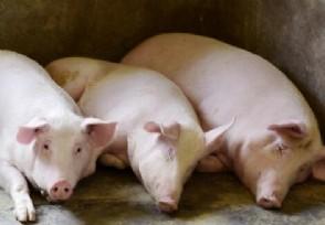 统计局回应猪价上涨高价运行还会持续一段时间