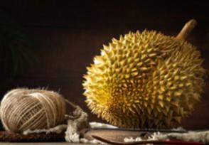 猫山王榴莲多少钱一斤价格较比泰国榴莲更贵