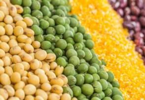 至少25国遭受饥荒 多重因素加剧全球粮食紧缺!