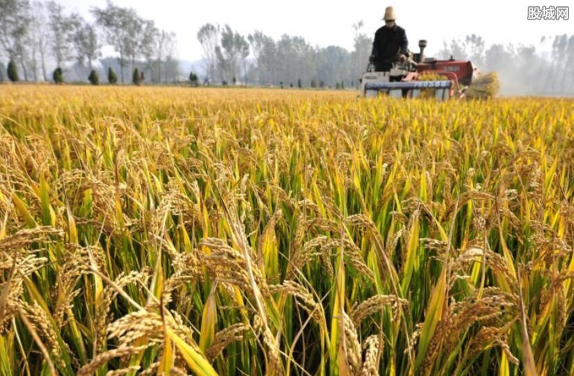 全球濒临粮食危机 中国粮价会上涨吗?