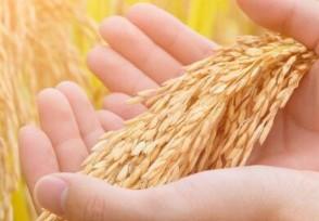官方谈拉尼娜事件或会扰乱全球粮食生产抬高价格