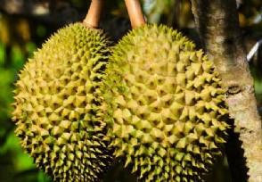 2020越南榴莲最新价格公布低至几块钱一斤也有