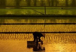 农业农村部谈粮价全面理性看待粮价的合理上涨