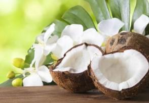 三亚景区椰子卖到20元市场比往年要紧俏