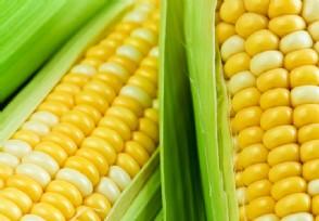 玉米最高涨到多少 市场价格上涨已失控