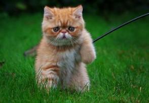 央视曝光云养猫骗局没有高额回报只有套路