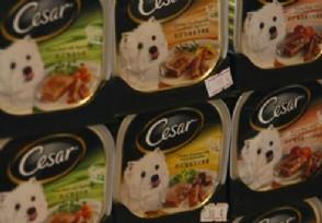 猫粮什么牌子好?市场上最畅销的品牌排名