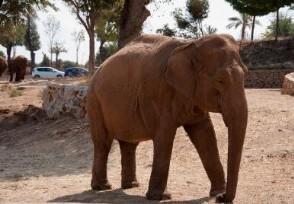 泰国八成象园倒闭入境游客锐减致八成
