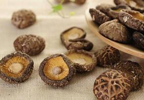 干香菇多少钱一斤保质期有多长时间