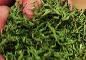 怎么挑选最好的茶叶?最容易鉴别方法介绍