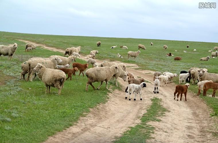 租羊除草每只每月320元