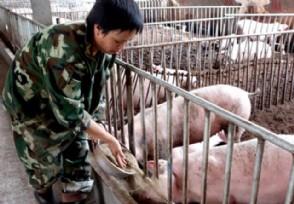 现在生猪价格多少钱一斤元旦猪价还继续上涨吗