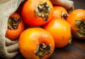 日本纹平柿子拍出天价约合人民币6395元