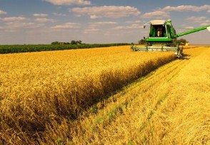 专家谈中国粮价趋势 供应有保障涨价难持续!