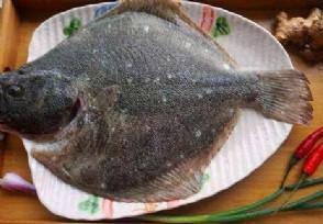 多宝鱼多少钱一斤 原来这种鱼这么贵的!