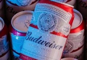 百威啤酒多少钱一瓶2020年最新价格介绍
