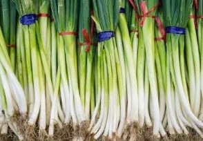 大葱涨价近3倍每�公斤超7元未来还继续上涨吗?