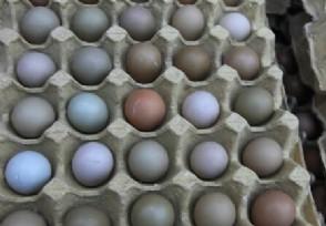 鸡蛋一斤多少钱 12月份价格还会上涨吗