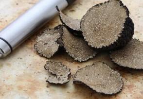 黑松露多少钱一斤 一次吃多少克最好?
