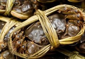 大闸蟹一斤多少钱 这些选购方法建议收藏