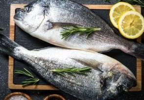 野生黑鱼多少钱一斤这些人不适合吃黑鱼