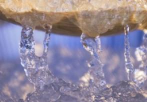 燕窝糖水含量超九成成本不超1元让人不敢相信
