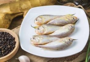 黄花鱼多少钱一斤黄花鱼的食用禁忌