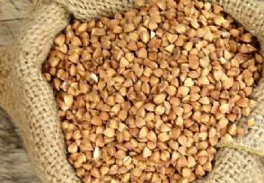 黑苦荞茶多少钱一斤市场价格表一览