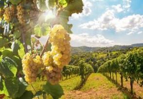 葡萄干一斤多少钱经常吃有哪些好处