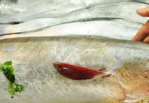 海鳗鱼多少钱一斤最新行情价格公布