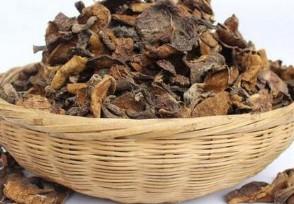 松菇多少钱一斤营养价值主要有哪些?