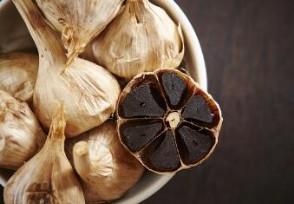 黑蒜的价格多少钱一斤 黑蒜哪里有卖?