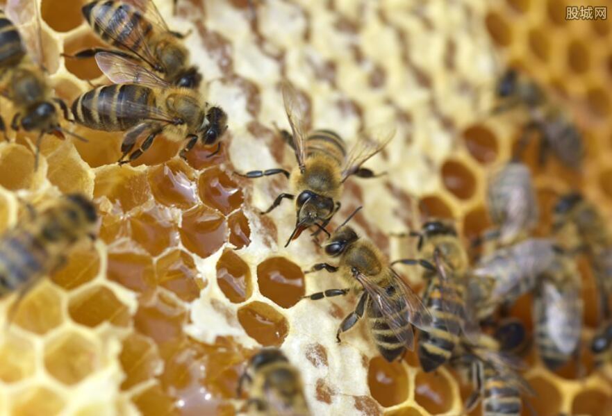 蜂胶如何选择