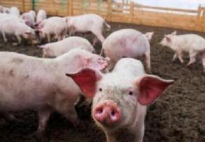元旦过后生猪价格 是继续上涨还是下跌?