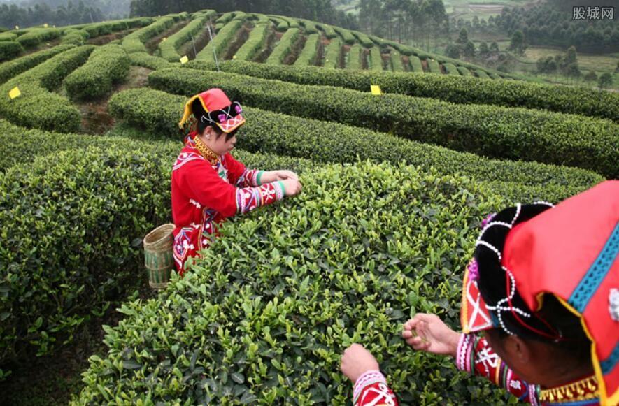 黑茶价位在多少钱一斤 根据这几点来决定