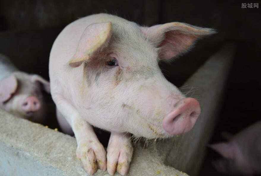 2021年猪价多少钱一斤