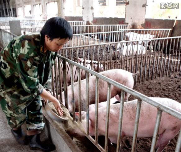 猪价2021年整体将下滑