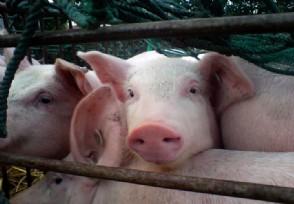 专家:预计2021年猪价向下走 节后价格将整体走低