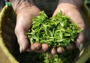 大益普洱茶最新价格哪个系列最好喝?