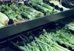 国家发改委回应菜价上涨 是什么原因导致的?