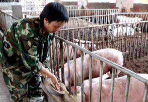最近生猪价多少钱一斤 1月26日最新价格行情