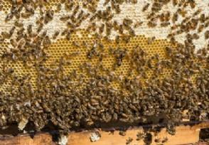 纯正蜂蜜多少钱一斤 2021最新价格