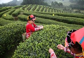 普洱茶一般多少钱一饼网上价格为什么这么便宜